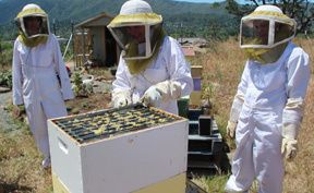 Use Essential Oils for Bees and their Bee Hives to Keep Them Healthy and Productive