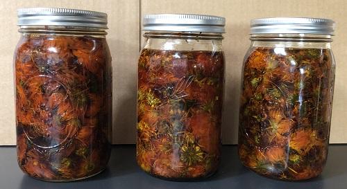 Steep calendula flowers in organic olive oil to make your own Calendula Oil