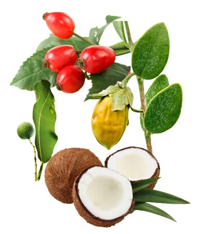 the Best Carrier Oil for Essential Oils can include jojoba, rosehip, fractionated coconut, tamanu