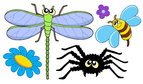 Caryn recommends essential oils for spider bites that relieve and soothe as you heal.