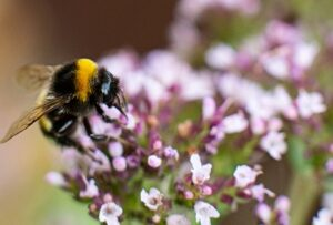 Keep bees and beehives healthy by using beneficial essential oils.