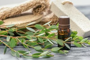 Experience these 3 main benefits of using eucalyptus in the shower: 1) Respiratory Support, 2) Mental & Emotional Support and 3) Soothes Pain & Inflammation