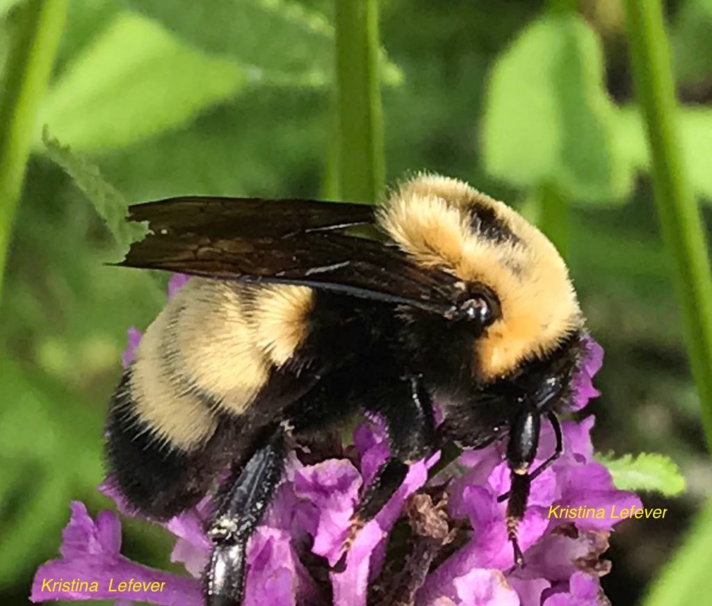 The non-profit organization, Pollinator Project Rogue Valley (PPRV) explains why we need pollinators.